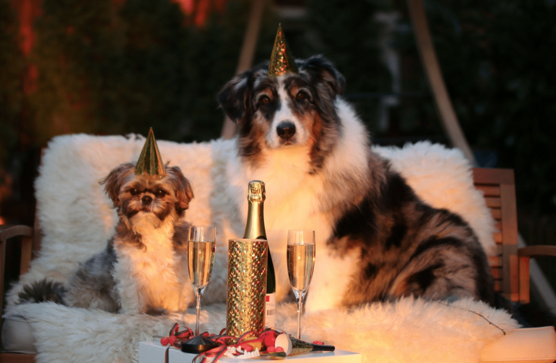 happy-year-of-the-dog